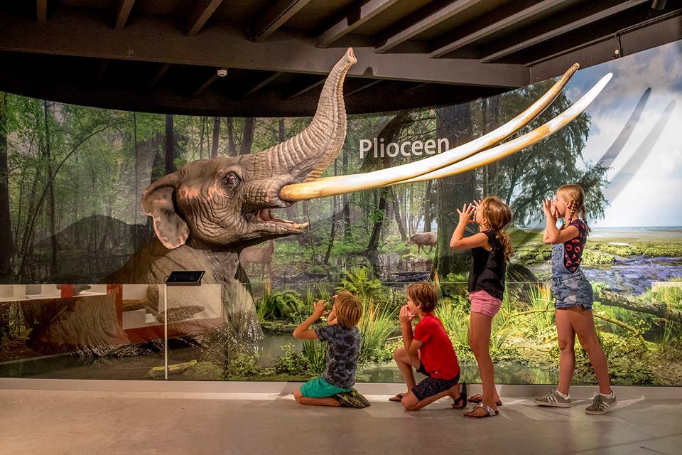 Kom oog in oog te staan met een mastodont.
